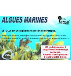 Algues Bretonnes